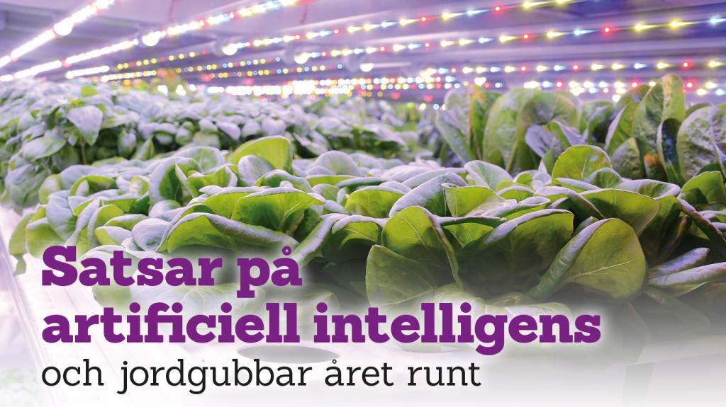 Satsar på artificiell intelligens och jordgubbar året runt